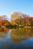 Autumn park with trees over water Stock Images