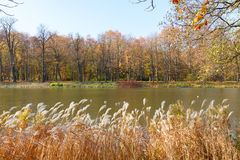 Autumn park with trees over water Royalty Free Stock Images
