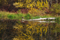 Autumn in the park. Autumn trees reflected in water Royalty Free Stock Image