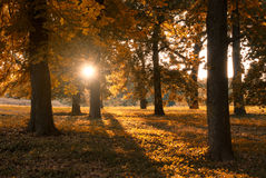 Autumn park. Trees on sunny autumn park Stock Photos