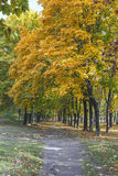 Autumn in the park. Royalty Free Stock Images