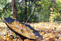 Autumn park, umbrella with leaves Stock Photography