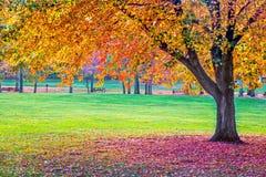 Autumn Park vibrante Fotografie Stock