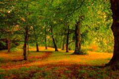 Autumn in park. Royalty Free Stock Photography