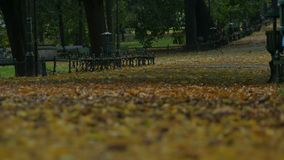Autumn Park View. Ground view of autumn park with autumn foliage with  various shades of red, yellow, purple, black, orange, pink, magenta, blue and brown stock video