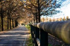 Autumn park walkway Royalty Free Stock Image