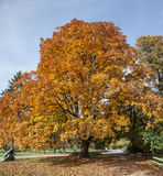 Autumn in Park, Warsaw, Poland Stock Image