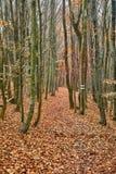 Autumn Park-weg Stock Afbeeldingen