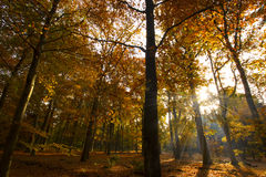 Autumn park, woods. With a flash of sunshine royalty free stock photos