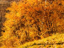 Autumn park yellow foliage Royalty Free Stock Photo