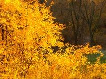 Autumn park yellow foliage Stock Images