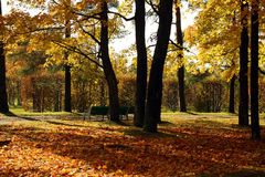 Autumn park with yellow leaves. On the ground Stock Images
