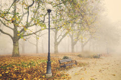 Autumn in the park, yellow leaves on the avenues,retro colors, vintage Royalty Free Stock Photo