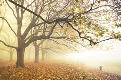 Autumn in the park, yellow leaves on the avenues,retro colors, vintage Royalty Free Stock Image