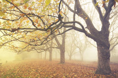 Autumn in the park, yellow leaves on the avenues,retro colors, vintage Royalty Free Stock Photos
