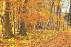 Autumn in the park, yellow leaves on the avenues,retro colors, vintage Royalty Free Stock Images