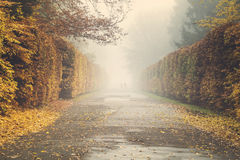 Autumn in the park, yellow leaves on the avenues,retro colors, vintage Stock Image