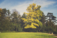 Autumn in the park, yellow leaves on the avenues,retro colors, vintage Stock Photography