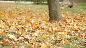 Autumn park with yellow leaves on grass.  stock video footage