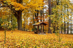 Autumn in park with yellow leaves on ground Royalty Free Stock Images