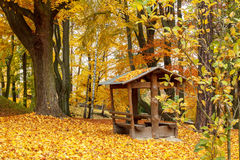 Autumn in park with yellow leaves on ground Stock Photo