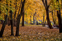 Autumn park. Yellow leaves laid down a gold carpet in autumn park Royalty Free Stock Photo