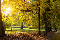Autumn Park with yellow leaves in the rays of the sun. Nature. Royalty Free Stock Photography