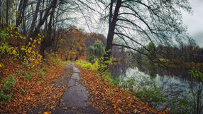 Autumn park with yellow leaves. And road Royalty Free Stock Image