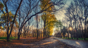 Autumn park with yellow leaves. And road Royalty Free Stock Photography