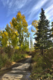 Autumn park. Yellow trees in autumn park Royalty Free Stock Photos