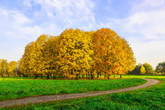 Autumn Park with Yellow Trees Among Green Grass Stock Photo