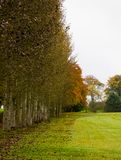 Autumn Parkland, Ireland. Russet leaves of an autumn parkland at Clane Golf Club Royalty Free Stock Image