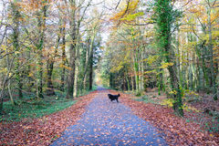 Autumn parks and dog  Royalty Free Stock Photo