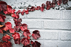 Autumn Partial Border - Red Grape Leaves Stock Images