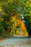 Autumn passage Stock Photos