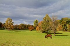 Autumn Pasture Royalty Free Stock Images