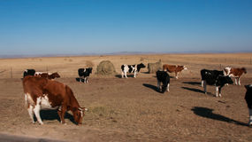 Autumn pasture. The hulunbuir autumn pasture of China Royalty Free Stock Image