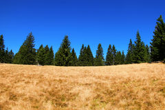 Autumn pasture landscape Royalty Free Stock Photo