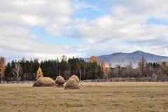 Pasture in autumn. Autumn pasture in Russian region Stock Photo