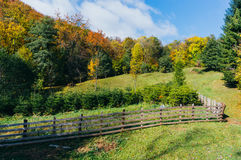 Autumn pasture and tree nursery Royalty Free Stock Images