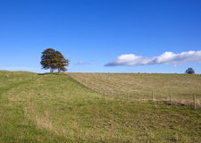 Autumn pasture Royalty Free Stock Photo