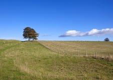 Autumn pasture Royalty Free Stock Photo