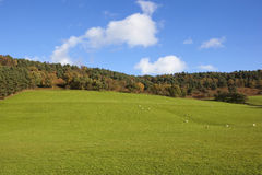 Autumn pastures Royalty Free Stock Photography