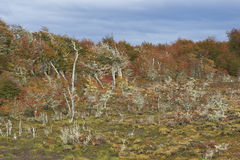 Autumn in Patagonia, Chile Royalty Free Stock Photo