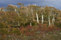 Autumn in Patagonia, Chile Royalty Free Stock Image