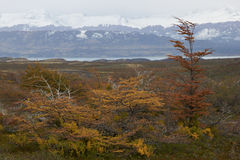 Autumn in Patagonia, Chile Royalty Free Stock Images