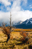 Autumn in Patagonia. The Torres del Paine National Park Royalty Free Stock Photo