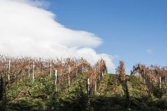 Autumn Patagonian Vineyard. Esquel, Argentina. Sunny Autumn Patagonian Vineyard. Esquel in late autumn, when grapes harvested, Argentina stock images
