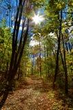 Autumn Path Imagens de Stock Royalty Free