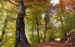 Autumn Path Fotografia Stock Libera da Diritti